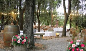 Ceremony and toast in the grove